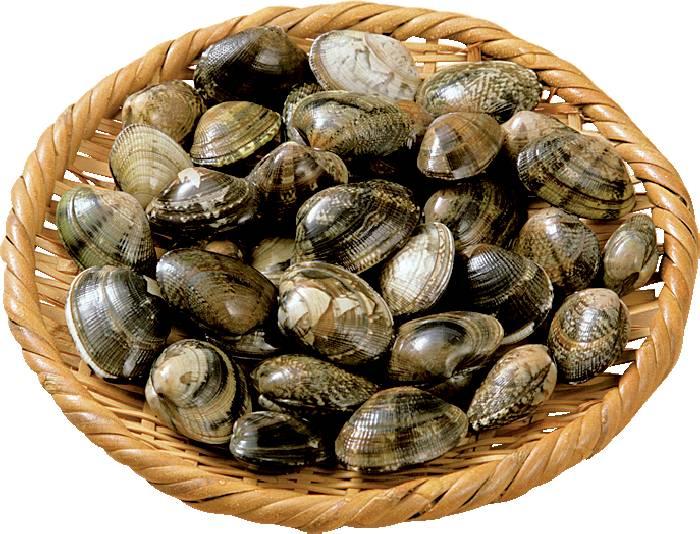 潮干狩りでも大人気!あさりに含まれる栄養素が知りたい!!のサムネイル画像