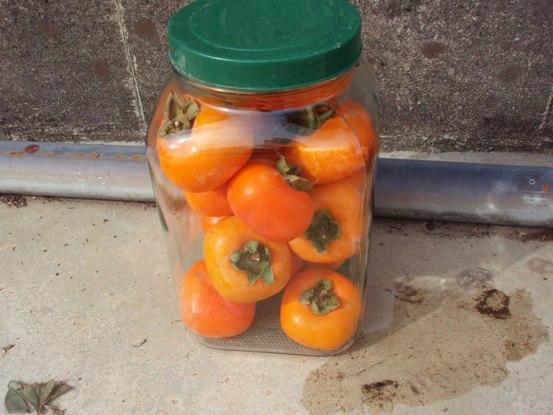 熟れた柿で作れるお手軽果実酢柿酢の作り方と柿酢を使ったレシピのサムネイル画像