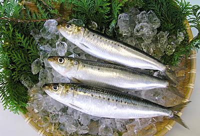 大衆魚の代表!いわしを使った簡単で美味しい煮付けの作り方特集のサムネイル画像