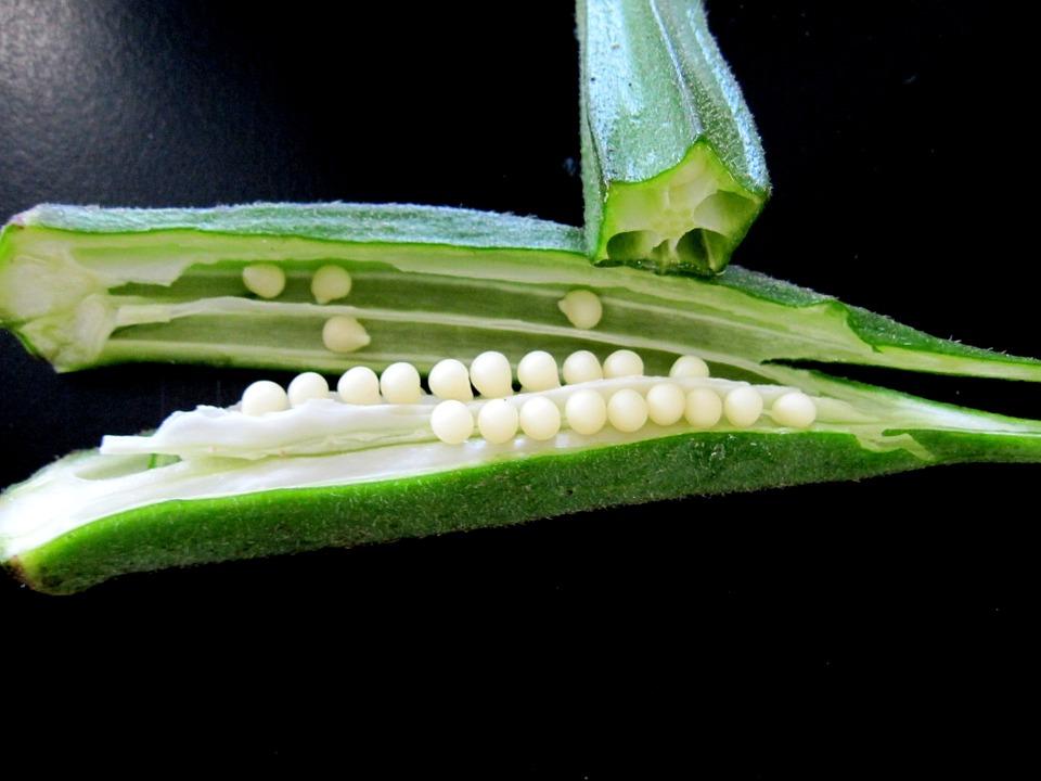 オクラは生で食べられるって知ってますか?生オクラのレシピのご紹介のサムネイル画像