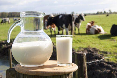 「牛乳」は太る飲み物?カロリーや効能など牛乳の謎を大公開!のサムネイル画像